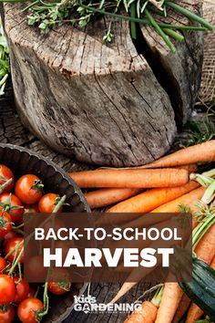 Enjoy a back-to-school harvest when kids return in the fall! A little midsummer planning and planting can keep garden vegetables growing into the new school year. The New School, New School Year, Back To School, Kids Org, School Gardens, Autumn Garden, Fall Harvest, Growing Vegetables, Teacher Resources