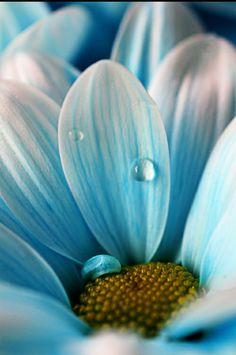 close up flower photography - Google'da Ara