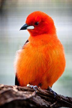 Bird at Wilhelma zoological and botanical gardens, Stuttgart, Germany by Sergiu Bacioiu