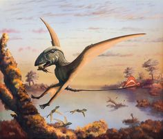 Mark Witton's Dimorphodon, which features in the commemorative volume of the 2015 Flugsaurier volume, out late 2017.  This print is free for all Mark's supporters on Patreon.  Visit Mark's Patreon for more. #Paleoart #Palaeontology #Pterosaurs