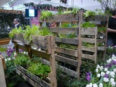Check out this entire garden built with wooden pallets.