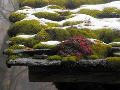 Sul tetto | Dagua in Valmalenco (So) italia