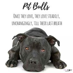 This is so true I love my pitbull he even tells me good morning in his own way Bull Terriers, Terrier Dogs, Pitbull Terrier, Pitbull Pups, Pitbull Facts, Blue Pitbull, Pitbulls, Pit Bull Love, Dog Rules