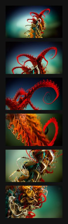 Frames from animated fractal object Metasefolia Fractal Geometry, Nature Images, Macro Photography, Fractals, Frames, Wallpaper, Frame, Wall Papers, Tapestries