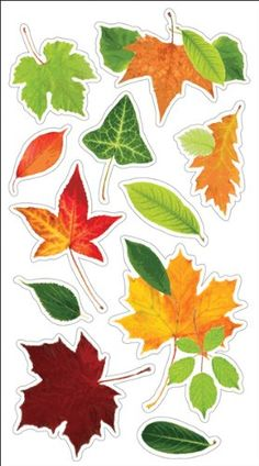 Autumn Leaves Stickers - All Leaves With UV Coating >>> Learn more by visiting the image link. Journal Stickers, Planner Stickers, Printable Stickers, Cute Stickers, Image Deco, Homemade Stickers, Leaf Template, Aesthetic Stickers, Amazon Art