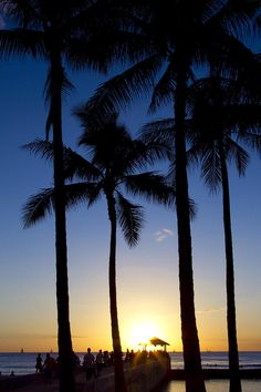 #Waikiki Palms Sunset, Oahu, Hawaii