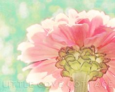 Pink Floral Photo 8x10  Fine Art Photography - Botanical Mother's Day Vintage Style Spring Flower