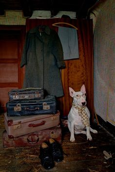 Bull Terrier photo 'All my Bags are Packed' by Alice van Kempen from her series 'My Urbex Adventures with Claire'
