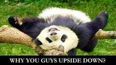 Panda Life  https://www.facebook.com/Panda-Life-894187597359826/