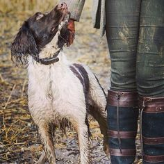 The perfect day for a muddy walk with a trusty companion in a pair of Dubarry boots. Country Wear, Town And Country, Country Style, Country Attire, Country Fashion, Dubarry Boots, Adventure Boots, Countryside Fashion, British Country