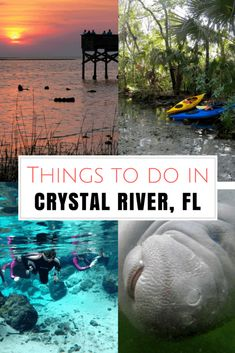 Here are five unique things to do in Crystal River, Florida, from swimming with manatees to kayaking to watching beach sunsets. This charming Old Florida town should definitely make it onto your Florida travel itinerary! Florida Keys, Places In Florida, Florida Springs, Visit Florida, Old Florida, Florida Vacation, Florida Beaches, Vacation Spots, Florida Trips