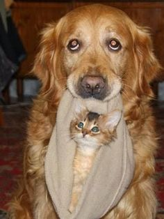 16 provas de que existe amor entre cães e gatos