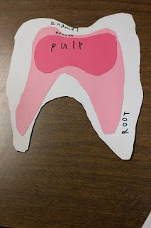Tooth Anatomy -Dental Care Unit Study
