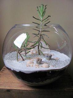 #seedtostembotanicals.com #terrarium