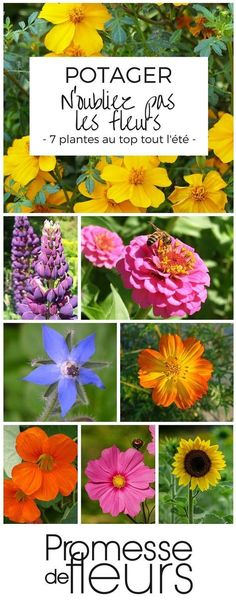 Des fleurs au potager : Oeillet d'Inde – Lupin – Zinnia – Bourrache – Cosmos… Flowers in the garden: Indian carnation – Lupine – Zinnia – Borage – Sulfur Cosmos – Capucine – Cosmos bipinnatus – Sunflower Potager Bio, Potager Garden, Garden Plants, Balcony Flowers, Flower Planters, Balcony Plants, Organic Gardening, Gardening Tips, Gardening Websites