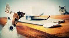 Produkte und Themen: Haustiere