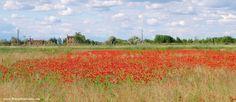 Pista Ciclabile a Cavallino Treporti, perfetta per nordic walking - amapolas papaver papaveri poppies mohnblumen ;-)