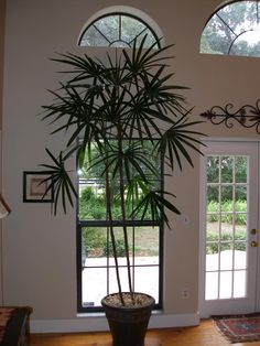 Awesome 10 Air-Cleaning House Plants That Tend Not To Die House Plants Decor, Plant Decor, Indoor Flowers, Indoor Plants, Ficus, My Happy Place, Houseplants, Container Gardening, Interior And Exterior