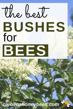 Flower bushes for bees and other pollinators.  Plantings shrubs bees love is a great way to help save bees. #carolinahoneybees
