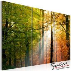 Kép - A calm autumn forest