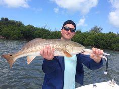 Sanibel Fishing, Redfish, 4-23-15, Sanibel Fishing Reports & Captiva Fishing Reports & Charters.
