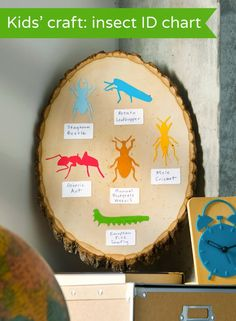 cool kids craft - easy insect ID chart - my boys would love this!