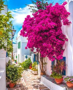 United States in the Places to Travel in the Worlds Beautiful Places To Travel, Wonderful Places, Beautiful World, Beautiful Gardens, Places Around The World, Around The Worlds, Paros Greece, Santorini Greece, Paros Island