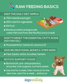 Does the idea of feeding your dog raw seem too complicated? Follow these easy guidelines to simplify your dog's diet! #dogsstuffpetcare