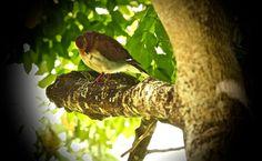Photo Shot taken with Canon EOS 10 shares, 36 likes and 1639 views. Bird Feeders, Birds, Outdoor Decor, Animals, Attila, Animales, Animaux, Bird, Animal Memes