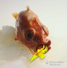 cool Fotografie »Rotbarsch mit Blume«,  #Stills