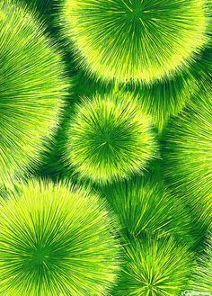 Mean Green, Go Green, Green Colors, Green Theme, Color Of The Year 2017 Pantone, Pantone Color, World Of Color, Color Of Life, Photographie Macro Nature