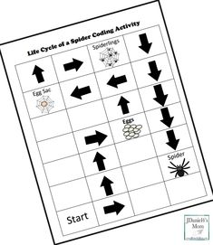 Life Cycle of a Spider Coding Activity- Step Four Picture