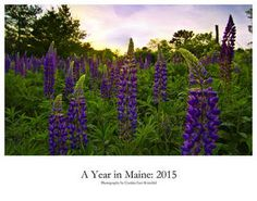 Want to spend a year looking at beautiful Maine landscapes taken by photographer, Cynthia Farr-Weinfeld?  Visit Lulu to purchase this awesome calendar!