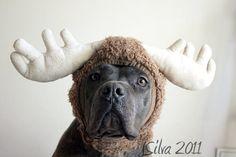 Pit-a-moose (pet-a-moose)