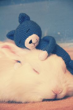 Some rabbits love their soft toys especially single bunnies who don't have anyone to snuggle with.