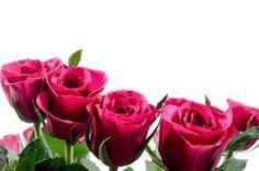 Flower, Flowers, Rose, Love