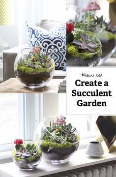 Here's a quick and easy tutorial for adding a little green to your decor. These Succulent Gardens are simple to make and look like a million bucks! Here's what you will need: large glass bowl succulents. Succulent Gardening, Garden Planters, Planting Succulents, Indoor Garden, Container Gardening, Outdoor Gardens, Planting Flowers, Air Plants, Indoor Plants