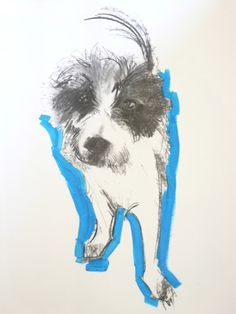 Sally Muir, 'dog a day' project.  Pop of colour and a playful angle, amplifies the dogs small stature :-)