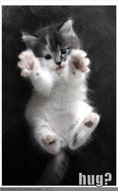 Hug.  Omg I want this kitten.