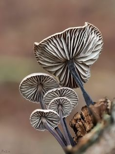 mushroom lamella by Frank Rückert on 500px