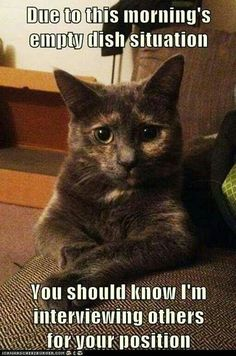 a-funny-lol-cat funny animal pictures pictures funny Animals Funny Animal Memes, Cute Funny Animals, Funny Cute, Cute Cats, Hilarious, Funny Memes, Memes Humor, Most Famous Memes, Game Mode
