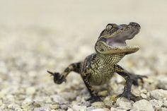 cute-reptiles-71__605
