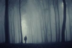 Brain Drain: Common Infections Could Help Explain the Brain-fog in Chronic Fatigue Syndrome (ME/CFS) - Health Rising Foggy Forest, Dark Forest, Brain Fog, Forest Park, Chronic Fatigue, Lightroom Presets, Stock Photos, Painting, Image