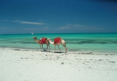 Wish I had pictures of my Mom and me riding camels on the beach in Djerba - it was amazing!!! Wonderful memory!!!