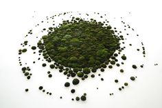 Anna Garforth--the big bang--moss art installation
