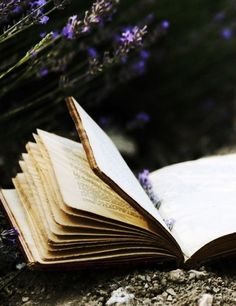 """""""O let my books be then the eloquence / And dumb presagers of my speaking breast"""" __Shakespeare, Sonnet 23"""