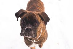Show your support for BC SPCA by voting for Marley in the BC SPCA Calendar Contest