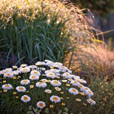 Magda Wasiczek / Collection_collection_arboretum-trojan-w-lato Photography Portfolio, Fine Art Photography, Ornamental Grasses, Gallery, Flowers, Plants, Summer, Collection, Art Photography