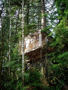 Tree House from below by B e t h, via Flickr