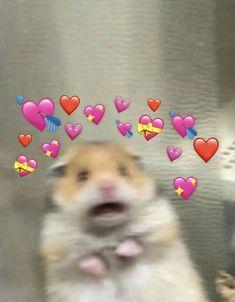 Cute Cat Memes, Cute Animal Memes, Cute Love Memes, Cute Funny Animals, Cute Cats, Cat Wallpaper, Cute Wallpaper Backgrounds, Wallpaper Iphone Cute, Cartoon Wallpaper
